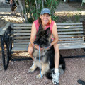 American Canine Training & Boarding dog boarding & pet sitting