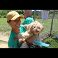 Yonkers Puppy Palace! dog boarding & pet sitting