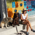 Happy PackVacay dog boarding & pet sitting