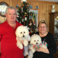 Bichons Bungalow dog boarding & pet sitting