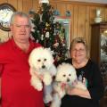 Bichons Bungalow dog boarding & pet sitting