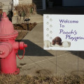 Pooch's Playground dog boarding & pet sitting