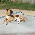 Taylors Indianapolis doggy care! dog boarding & pet sitting