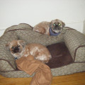Bunk In Buddies dog boarding & pet sitting