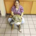Amanda`s Compassionate Pet Care,inc dog boarding & pet sitting