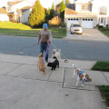 Experienced and Compassionate Care! dog boarding & pet sitting