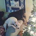 Shephards fun house dog boarding & pet sitting