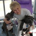 Dog Angels & Pet Lovers Paradise! dog boarding & pet sitting