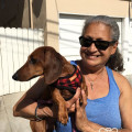 A Dog Loving Grandma dog boarding & pet sitting