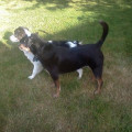 Get vacation dates covered now! dog boarding & pet sitting