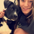 LJP's Dog Service - Mallard Creek dog boarding & pet sitting