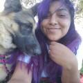happy dog house dog boarding & pet sitting