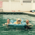 The Cooper Inn dog boarding & pet sitting