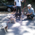 2 Dogs Adopted Us & We'd Love More dog boarding & pet sitting