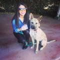 Alex's puppy palace! dog boarding & pet sitting