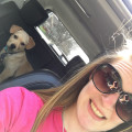Brittany's Waggin Good Time dog boarding & pet sitting