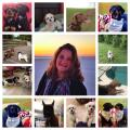 Fenway WannaB and Woof Central dog boarding & pet sitting