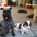 Olympia Small Dogs dog boarding & pet sitting