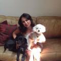 Covina Doggie Resort & Spa dog boarding & pet sitting