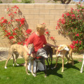 Palm Springs Paradise dog boarding & pet sitting