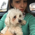 Welcm 2 Chiquis home in Plantation! dog boarding & pet sitting