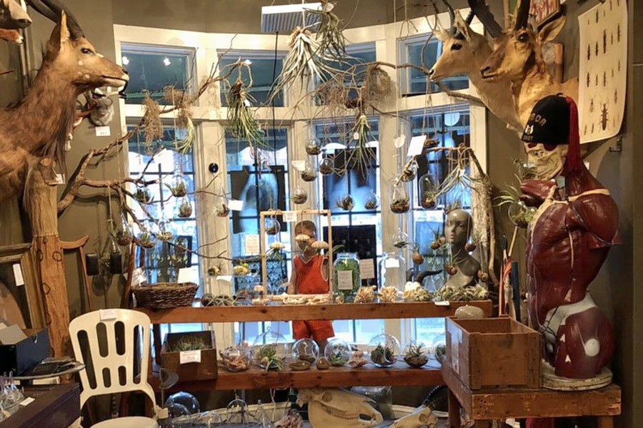 Shopping For Vintage Curiosities? The Top 3 Antique Shops In Baltimore