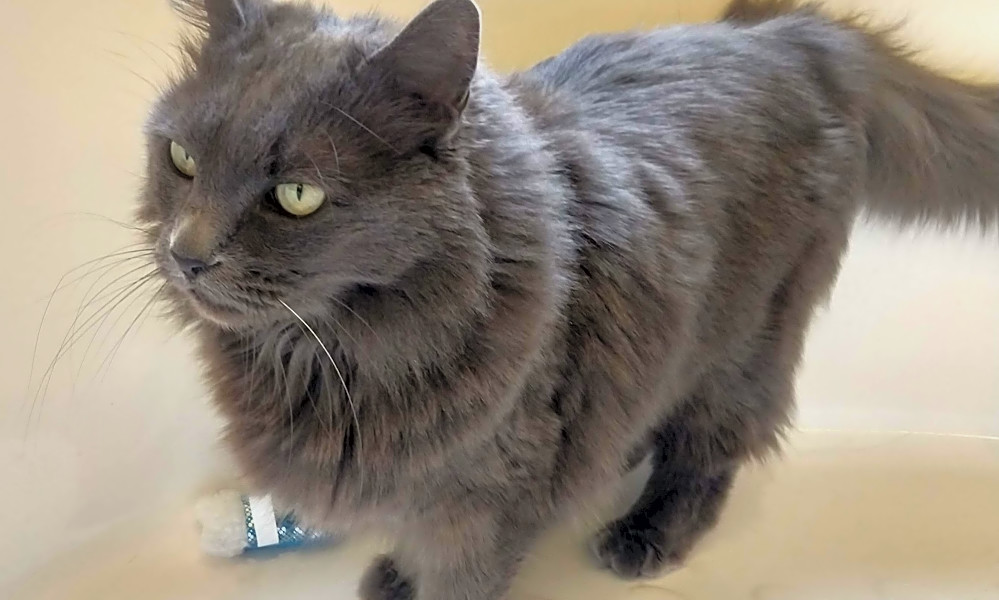 Vous cherchez à adopter un animal de compagnie? Voici 7 chatons mignons à adopter maintenant à Phoenix