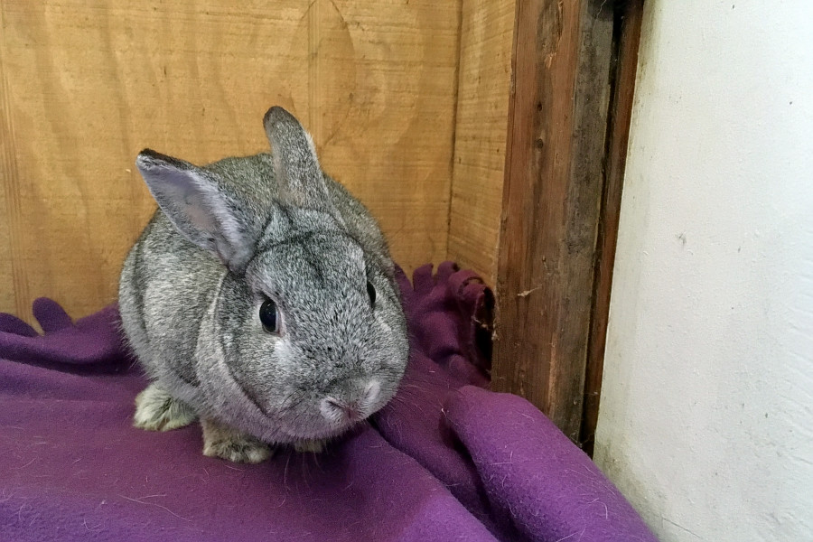 Rabbits In Baltimore Looking For Their Furr-Ever Homes