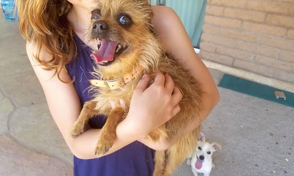 Ces chiens basés à Phoenix sont prêts à être adoptés et ont besoin d'un bon foyer