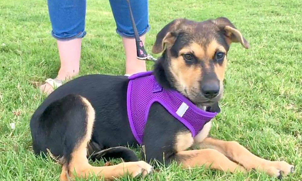 These Oklahoma City-based puppies are up for adoption and in