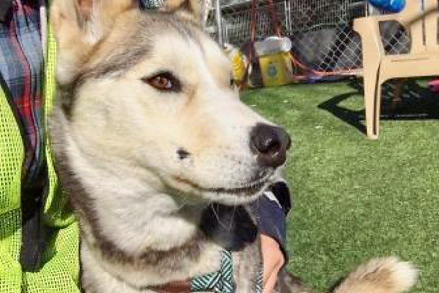 Seeking A Forever Home 7 Lovable Pups To Adopt Now In And Around