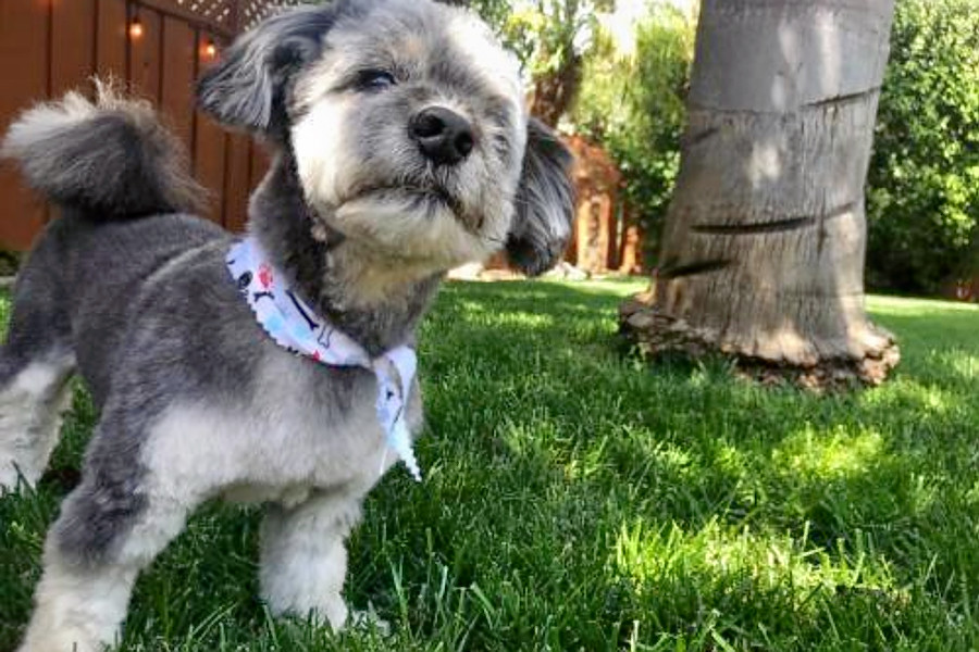 Puppies in San Jose looking for their furr-ever homes | Hoodline