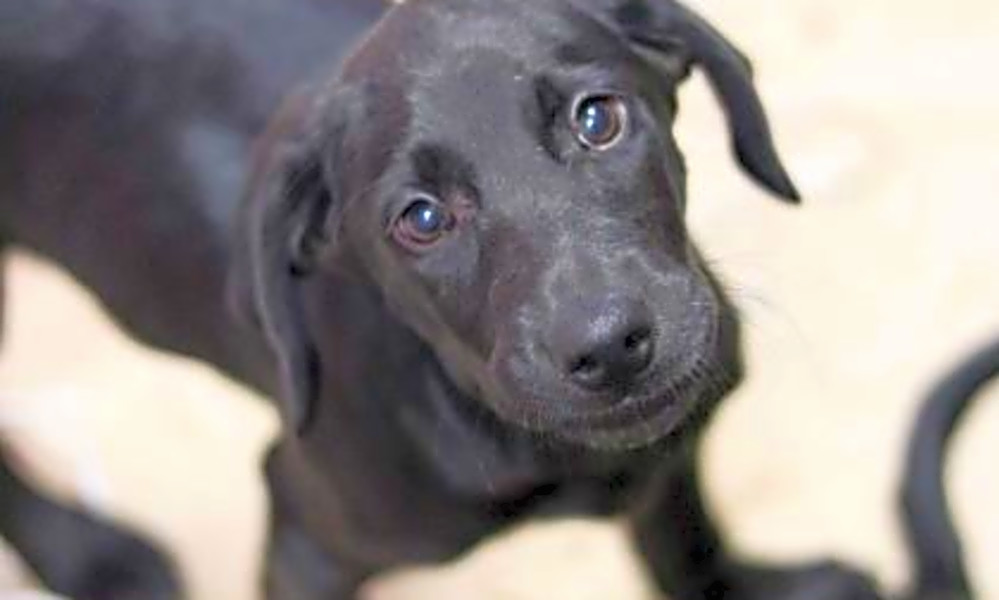 5 perfect pups to adopt now in Atlanta | Hoodline