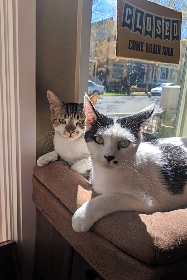 Cats in San Francisco looking for their fur-ever homes