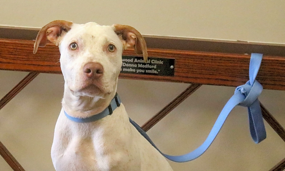 7 cuddly canines to adopt now in Houston