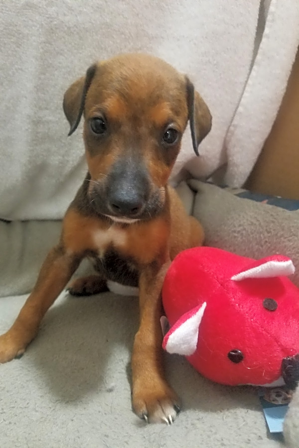 These Orlando-based puppies are up for adoption and in need