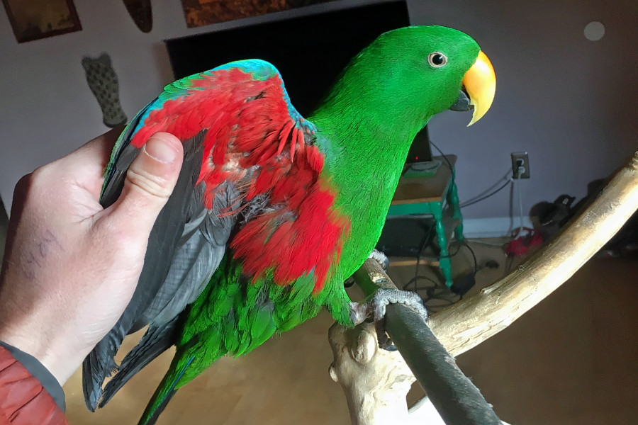 Seeking a forever home: 6 pretty parrots to adopt now in