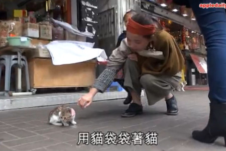 Woman returns stolen kitten to Tai Po shop, says she 'thought it was a stray'