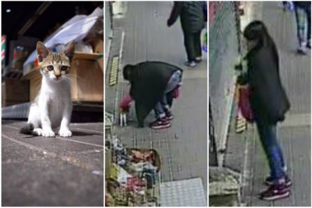 Kit-napped: Photos of woman stealing cat from seafood shop in Tai Po shared widely