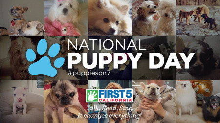 ABC7 holding adoption event for National Puppy Day 2017