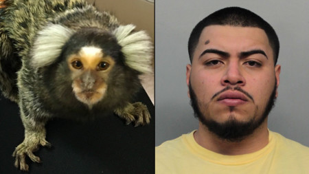 Homestead Man Accused of Stealing, Selling Woman's Pet Monkey