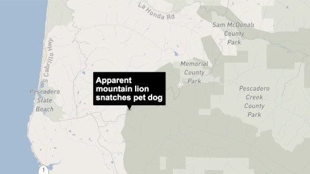 DNA evidence confirms a mountain lion snatched a small dog from owner's bedroom