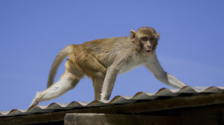 Monkey Spotted Near Restaurant in Central Florida