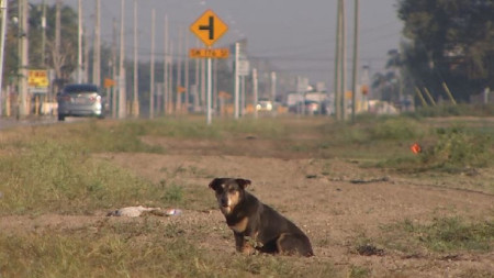 Dogs Dumped, Desperate and Left for Dead