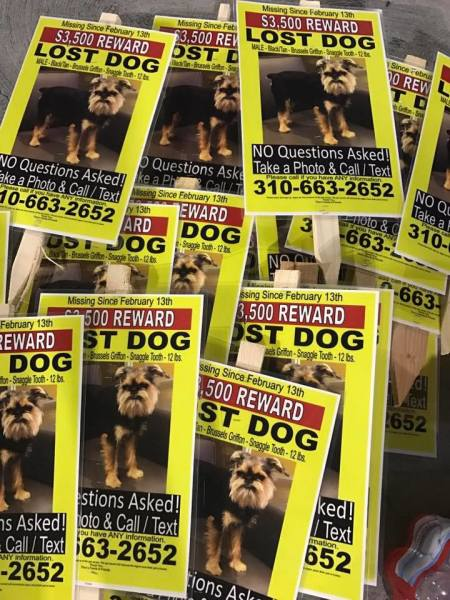 South Bay couple desperate to find missing dog, postpones wedding