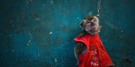 WATCH: What happened to Jakarta's dancing monkeys (topeng monyet) after the practice was banned in 2013?