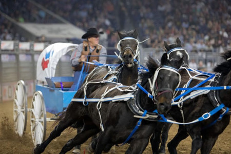 Chuck Wagon Driver Injured After Falling During RodeoHouston Race