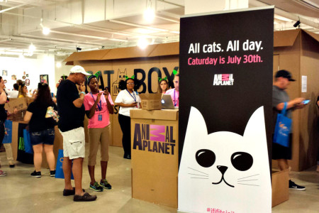 One purr-fect party: Downsview park to host its own kitty cat conference this spring
