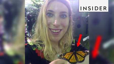 [VIDEO] Get Covered in Butterflies at the American Museum of Natural History