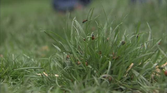 Earth Day Ladybugs